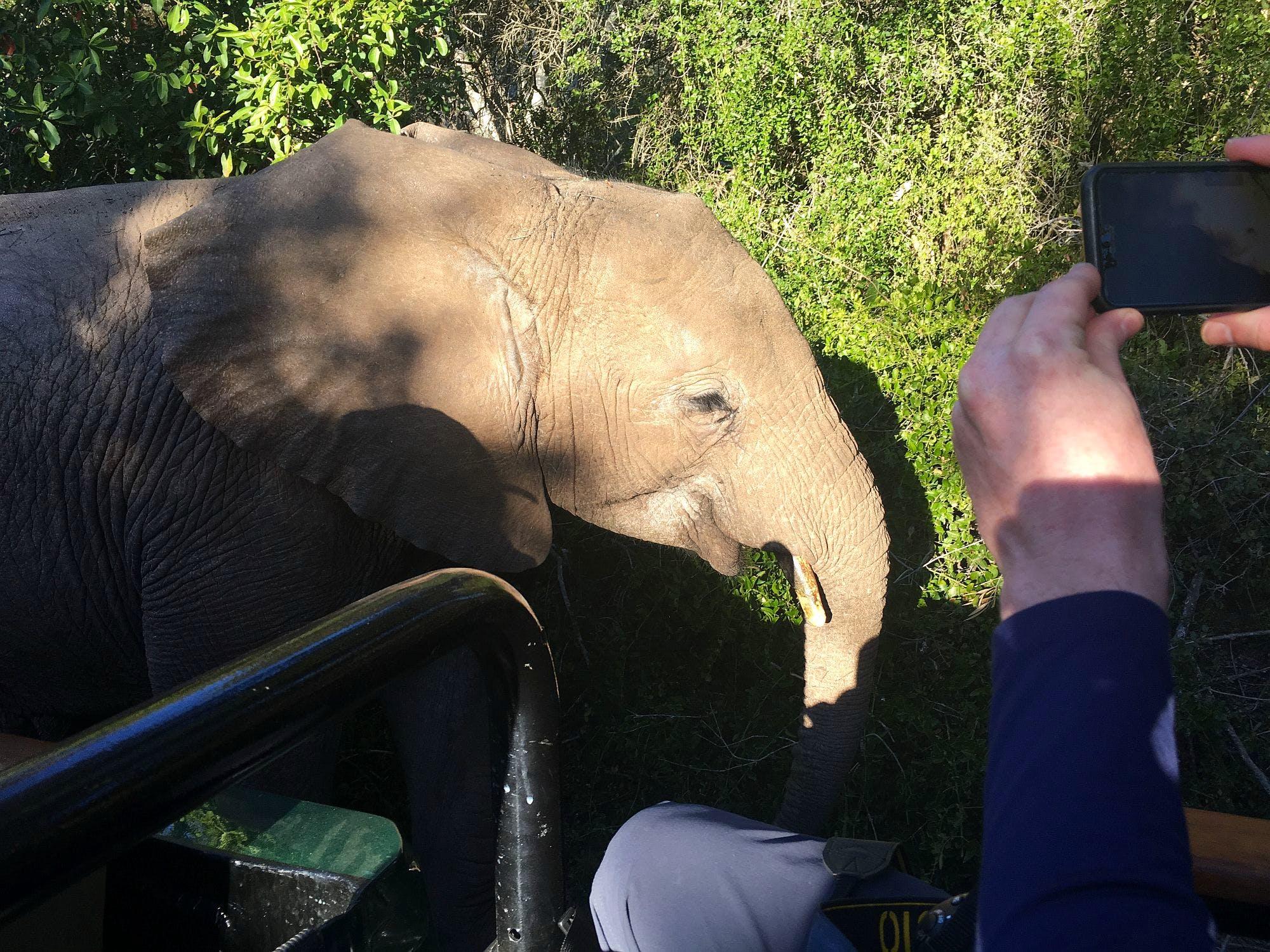 Big Five Conservation Supporter