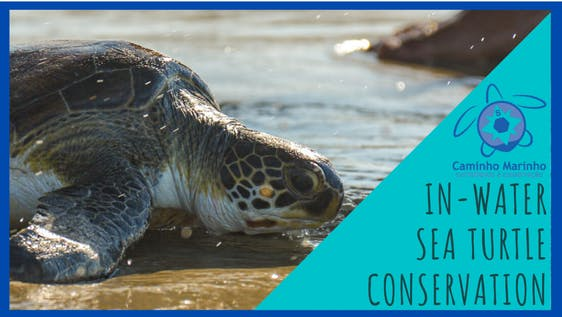 In-Water Sea turtle Conservation