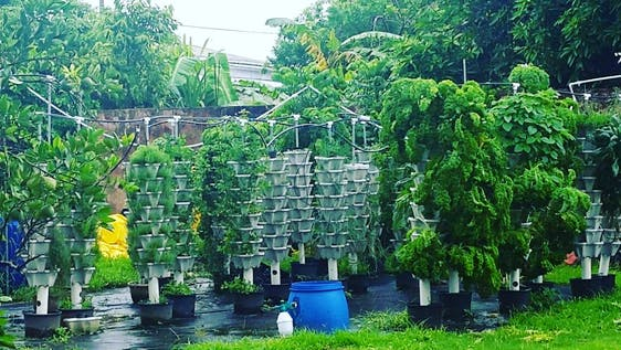 Hydroponic Garden Food Security