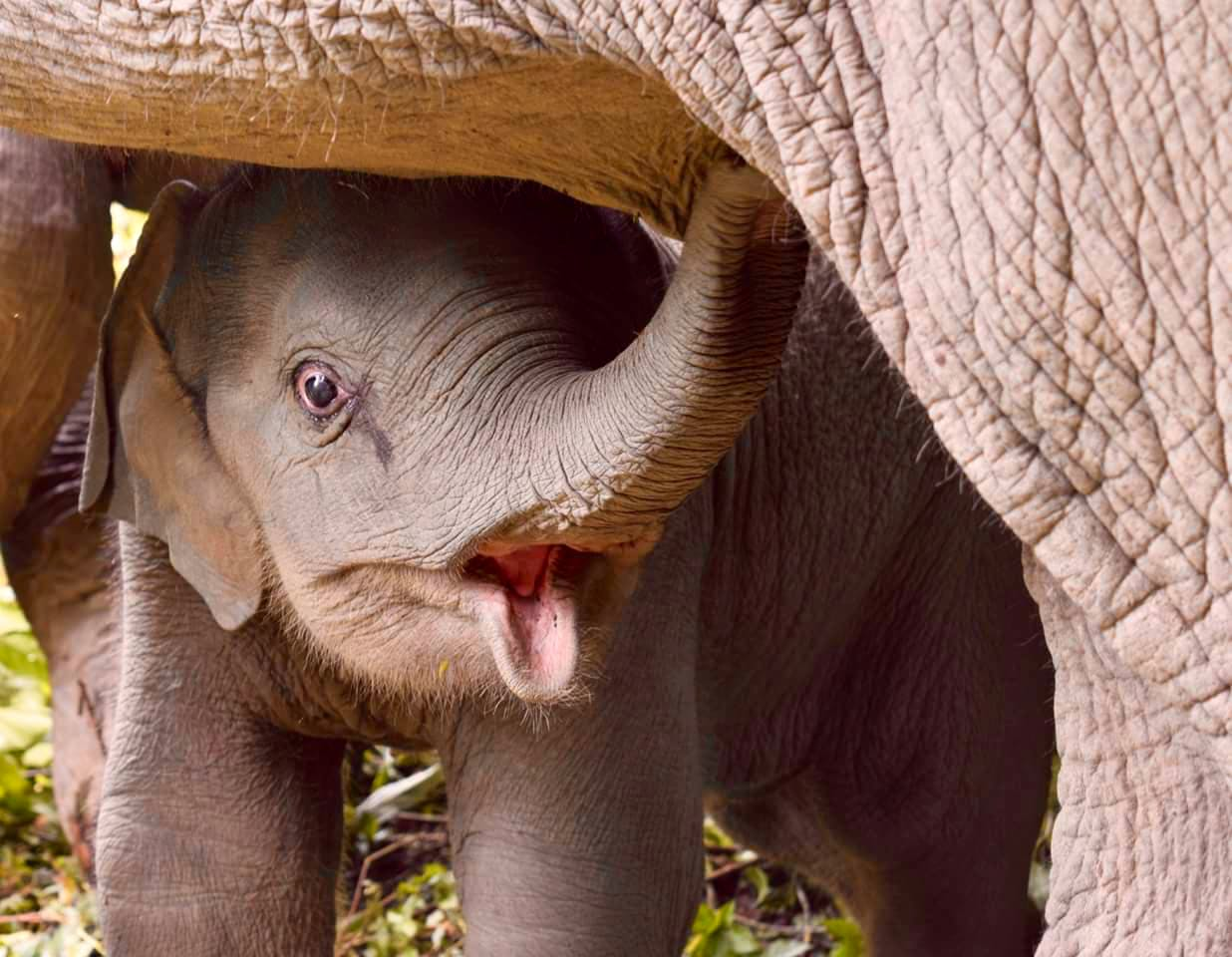 Cultural Immersion & Elephant Conservation