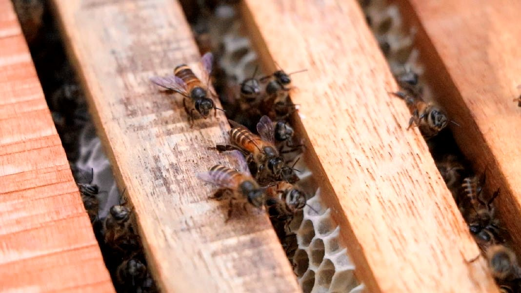 Volunteer in Bee Conservation Program