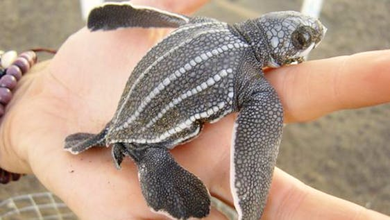 Learn Spanish, Sea Turtle & Marine Conservation