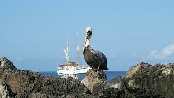 Ultimate Spanish & Galapagos EduTour