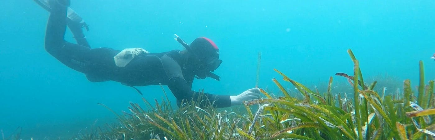 Biodiversity Monitoring Field Assistant