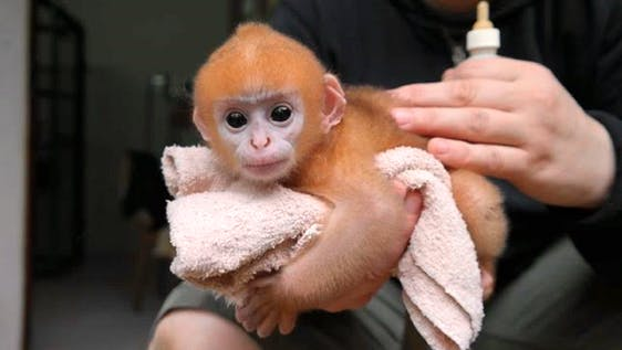 Wildlife Rescue and Conservation
