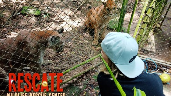 Wildlife Internship