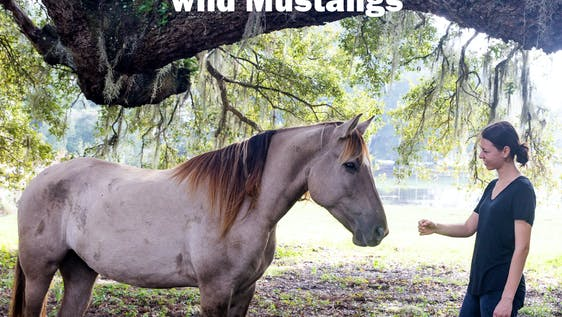 Care for Abused Wild Mustang Horses