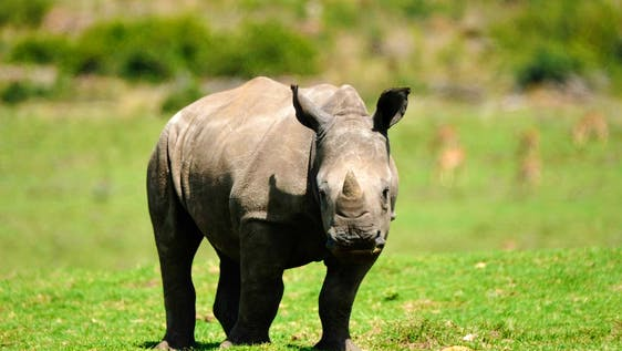 Wildlife Research and Conservation - South Africa