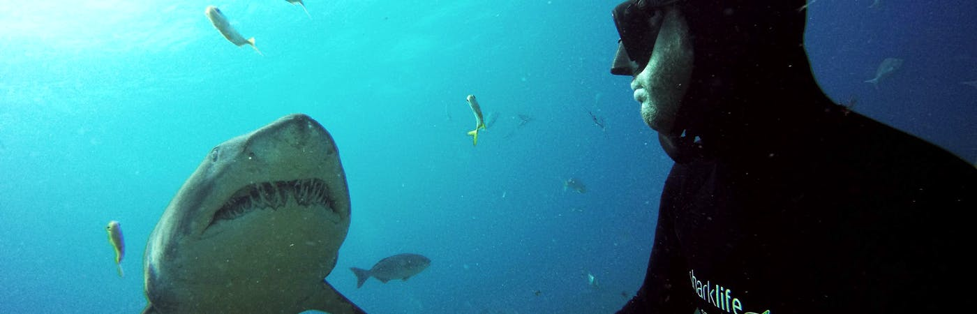 Sharklife Internship