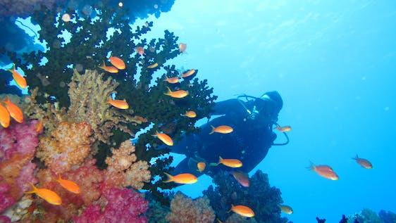 Marine Conservation & PADI Divemaster Internship