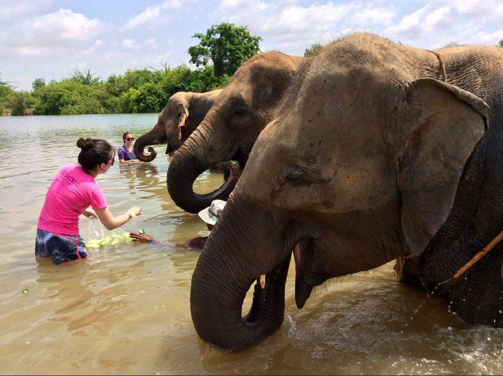 Elephant Community Refuge