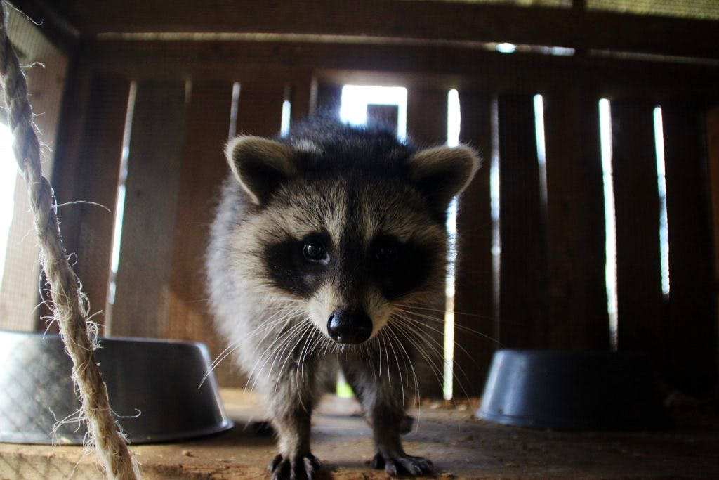 Rural Wildlife Caretaker
