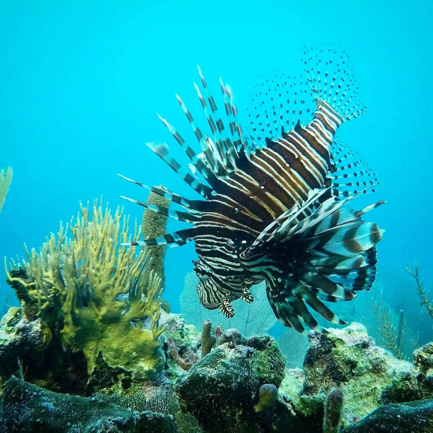 Conservation and Marine Ecology