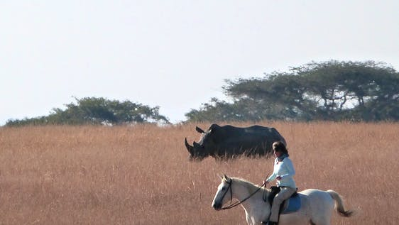 Horse Riding & Wildlife Conservation