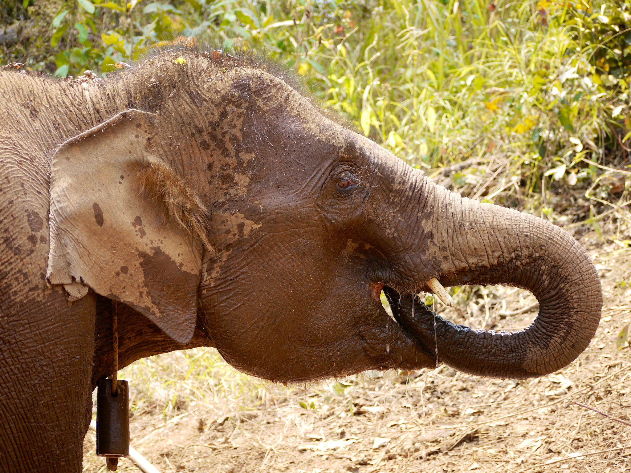 Elephant Conservation & Community involvment