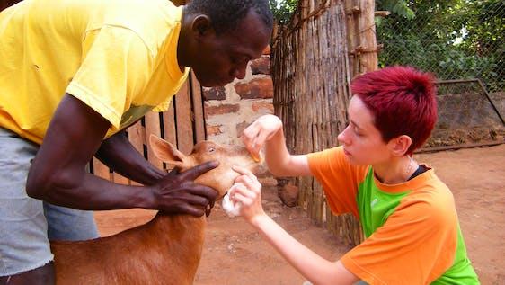 Animal Welfare and Veterinary Medicine