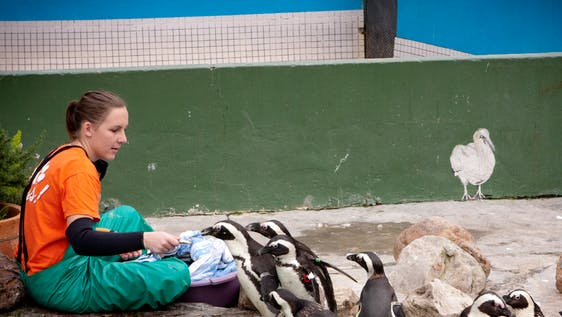 Animal Rehabilitation Assistant