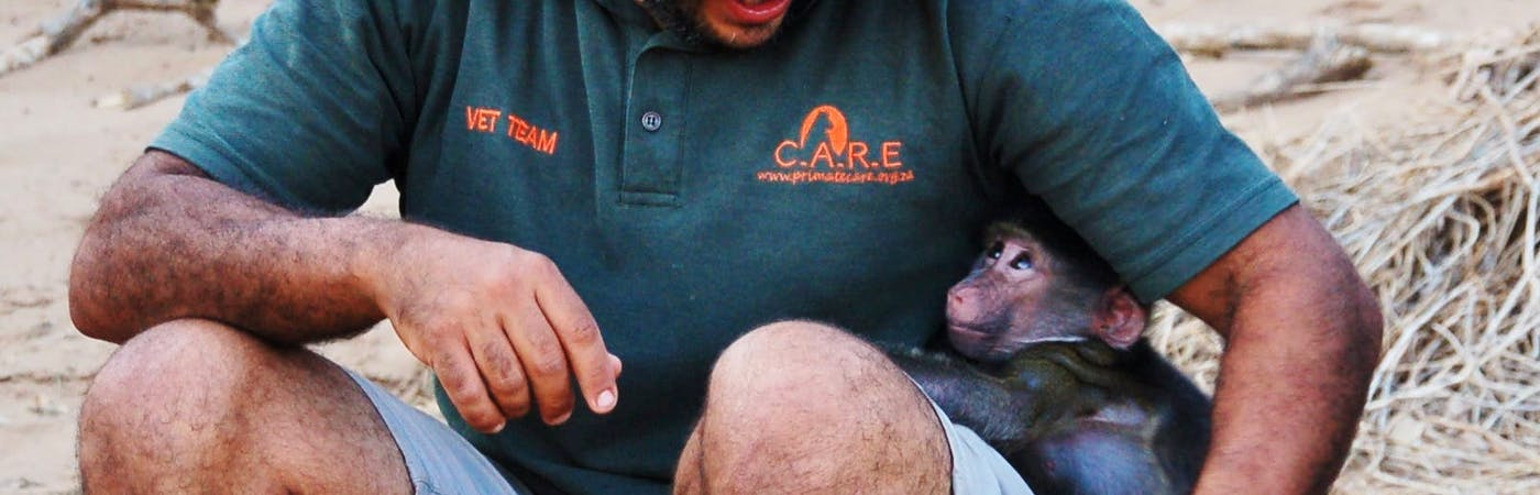 Baboon Orphan Care-Giver