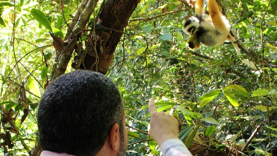 Lemur Research and Protection