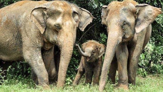 Elephant Conservation Worker
