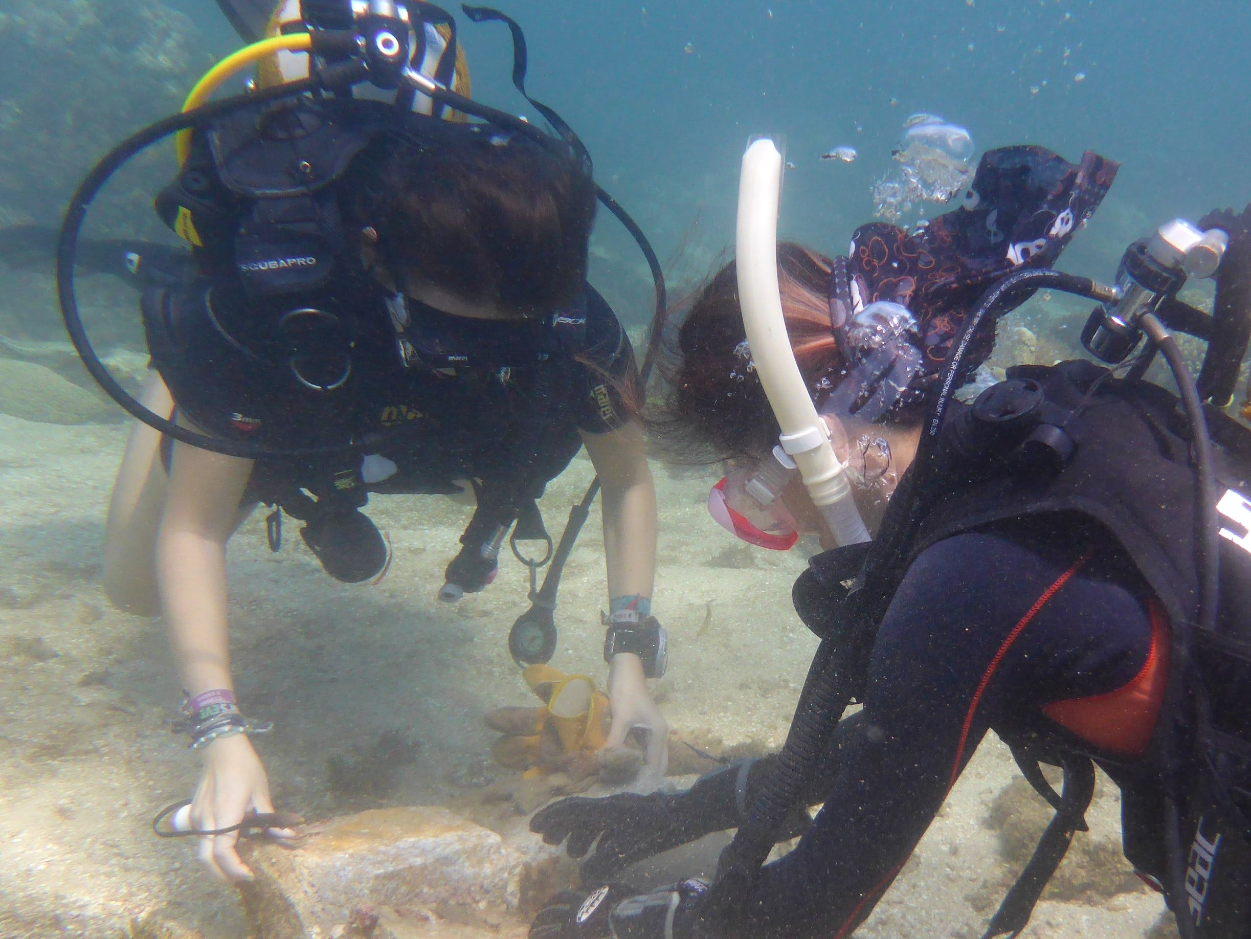 Marine Conservation Assistance