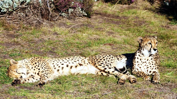 Wildlife Awareness, Rehabilitation and Veterinary