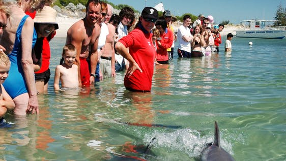 Conservation with Dolphins in Research and Tourism