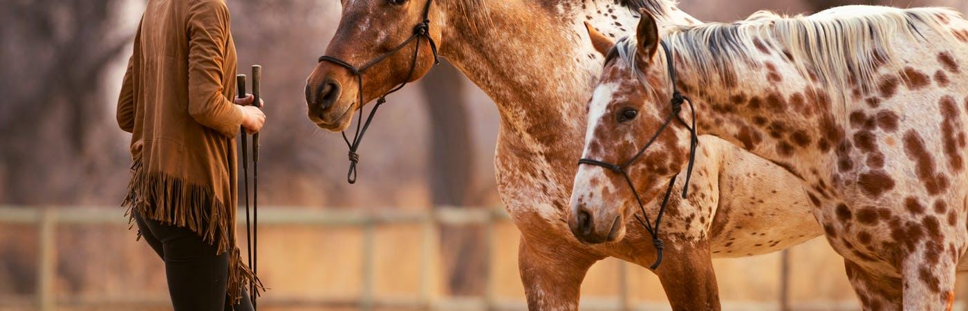 Liberty and Horsemanship Course at Breeding Stud