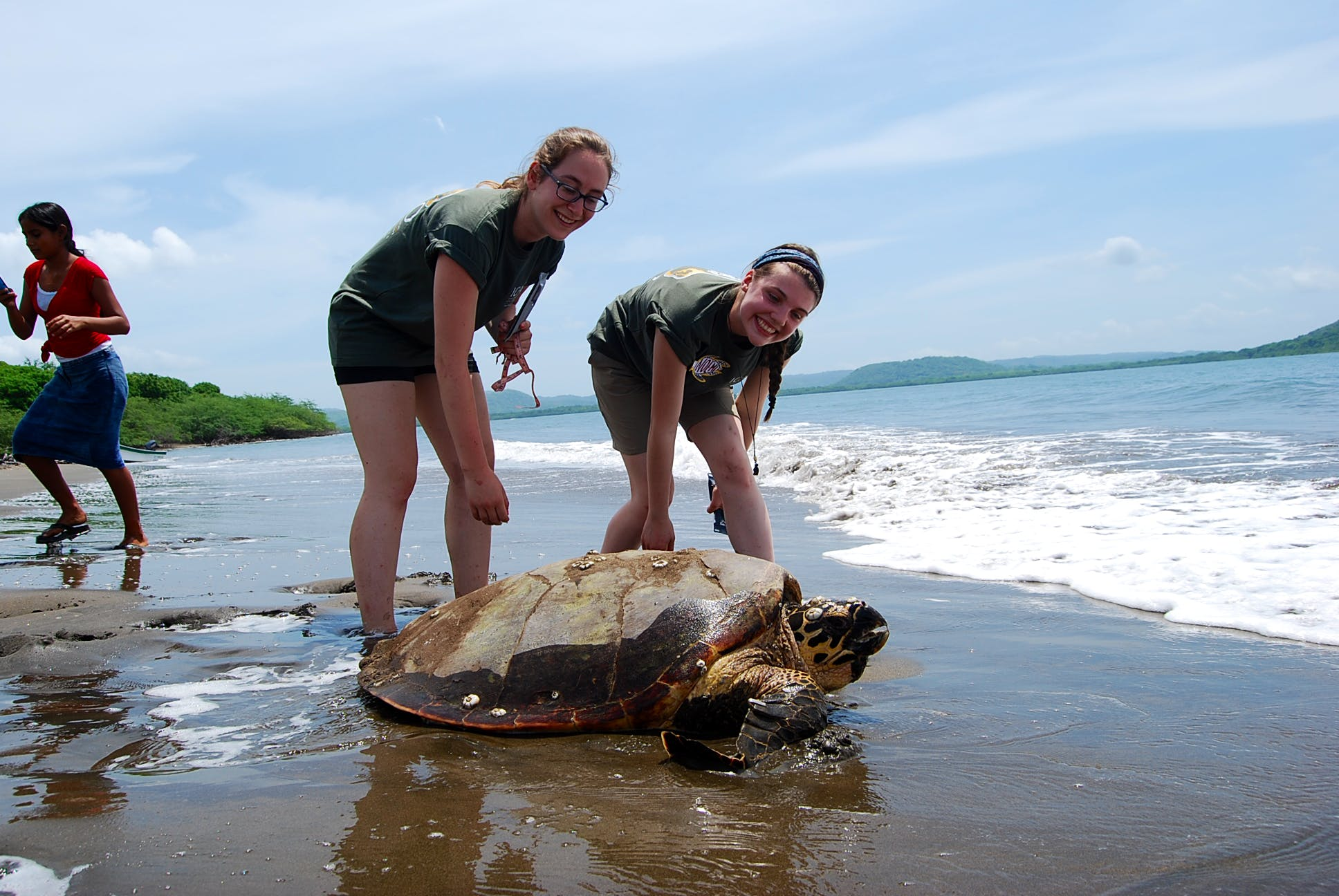 Sea Turtle Conservation Assistance