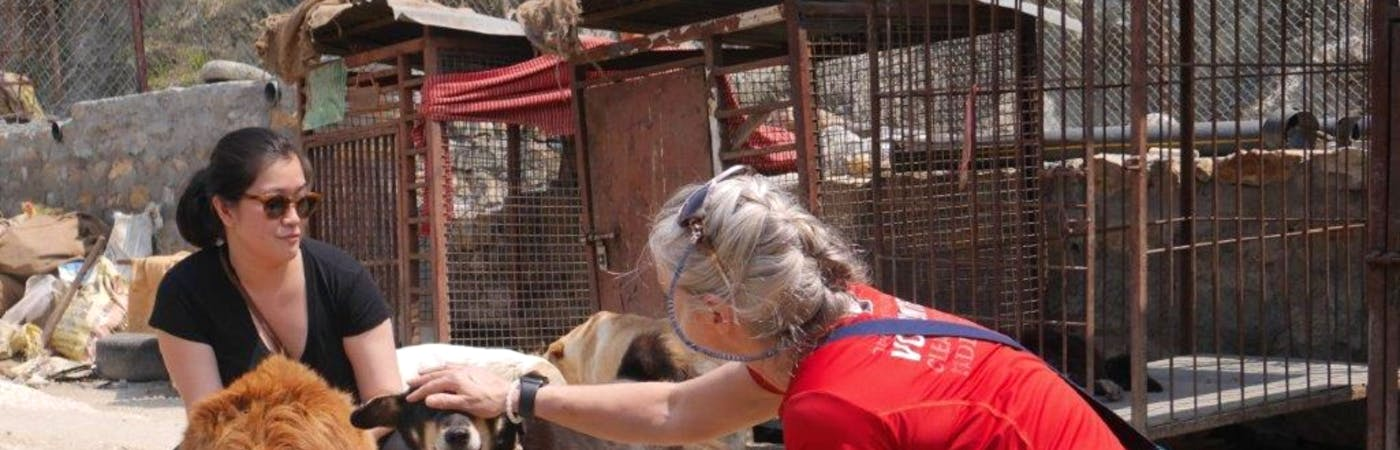Stray Dog Rehabilitation