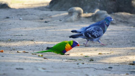 Adelaide Conservation Study EduTour
