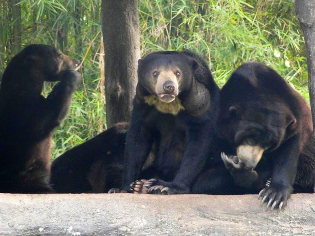 Thai Resident Bear Care