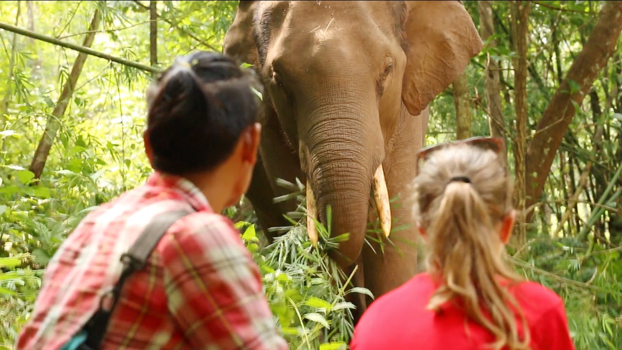 Work with Elephants and Teach English