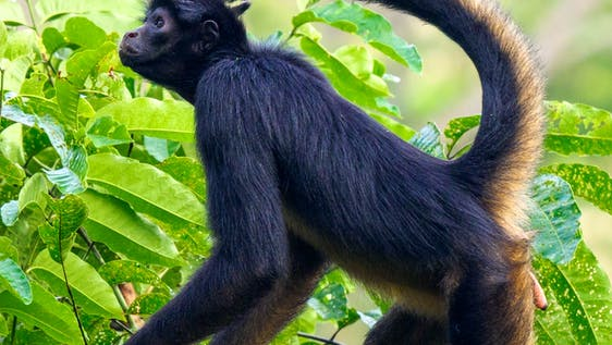 Wildlife Rehabilitation - a Jungle Adventure