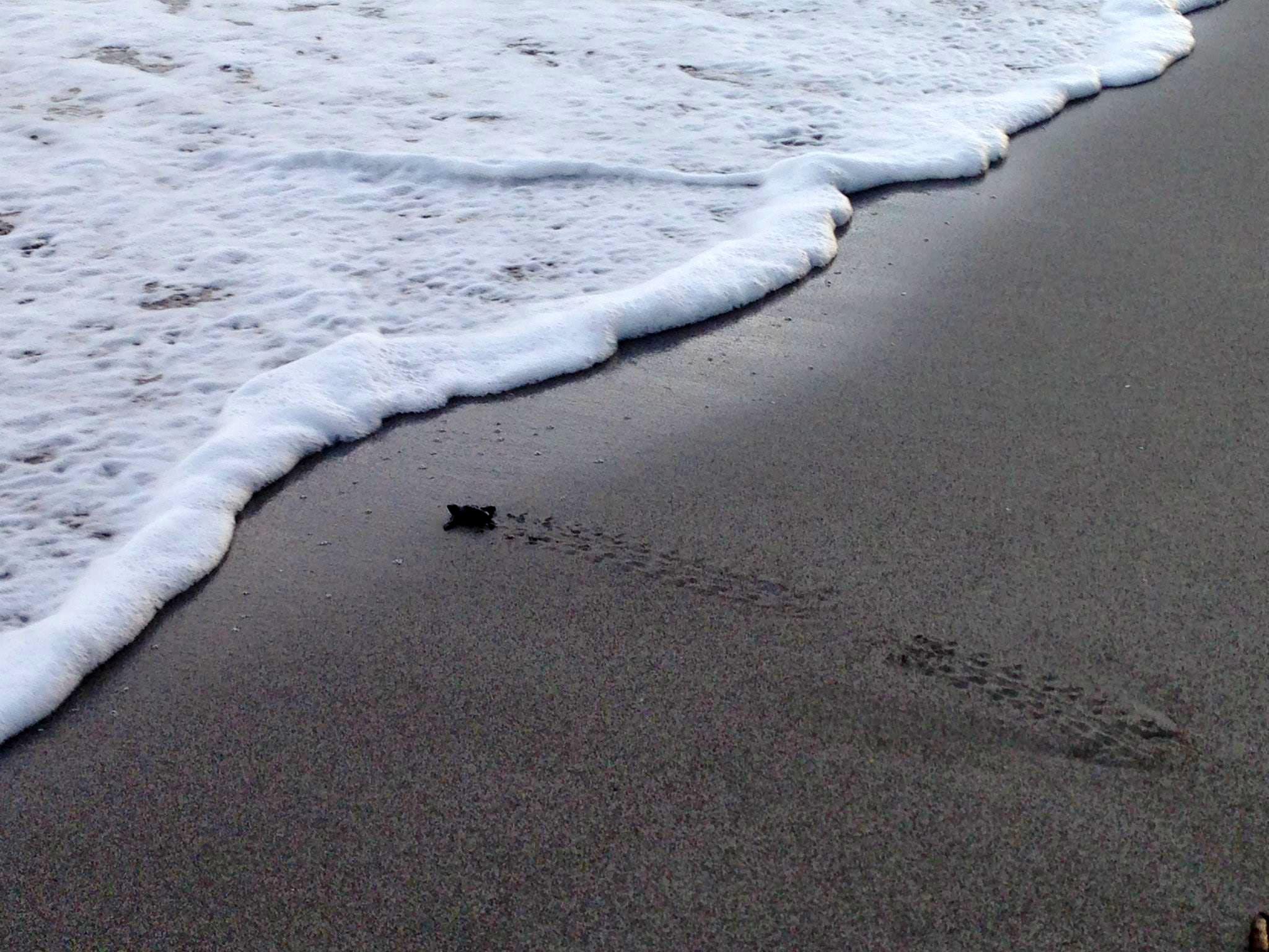 Turtle Conservation Helper