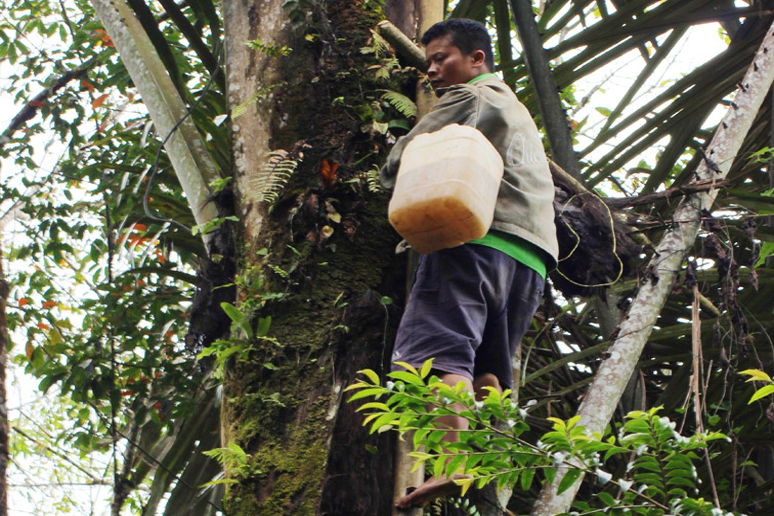 Agroforestry & Slow Lorises Conservation Supporter