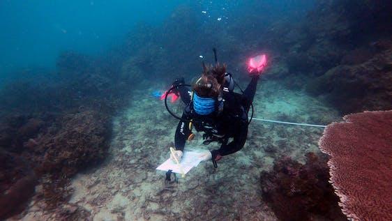 Reef Check Eco Diver