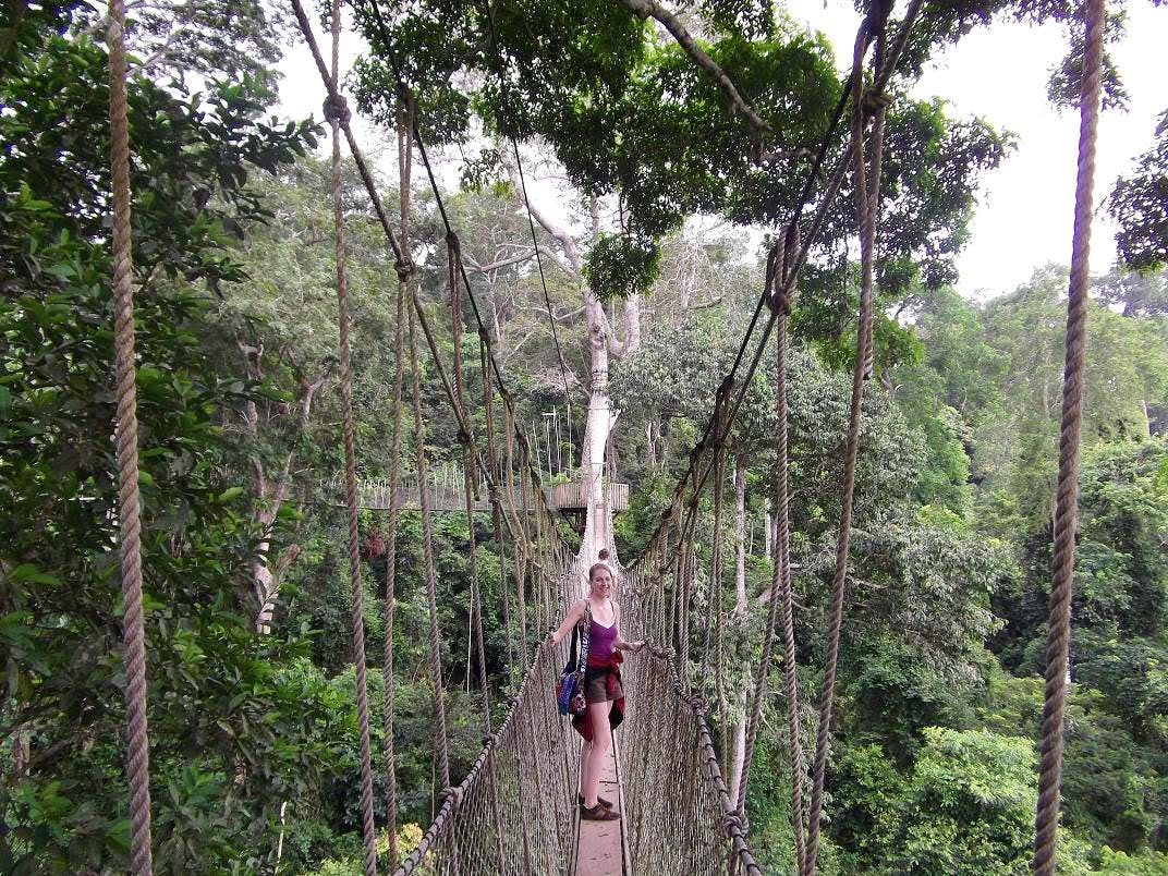 Natural Forest Conservation
