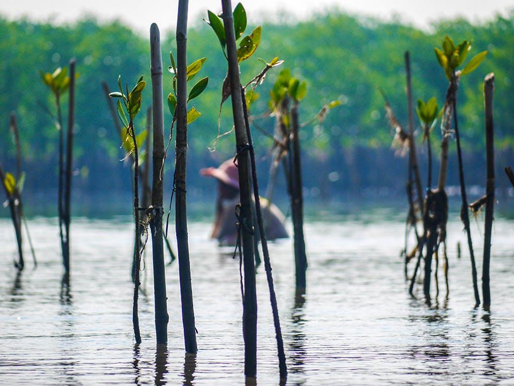 Mangrove Conservation