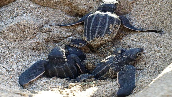 Protect Sea Turtles in the Caribbean