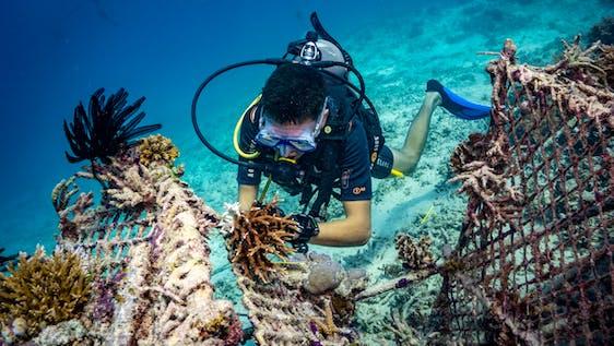 Biorock Coral Reef Restoration