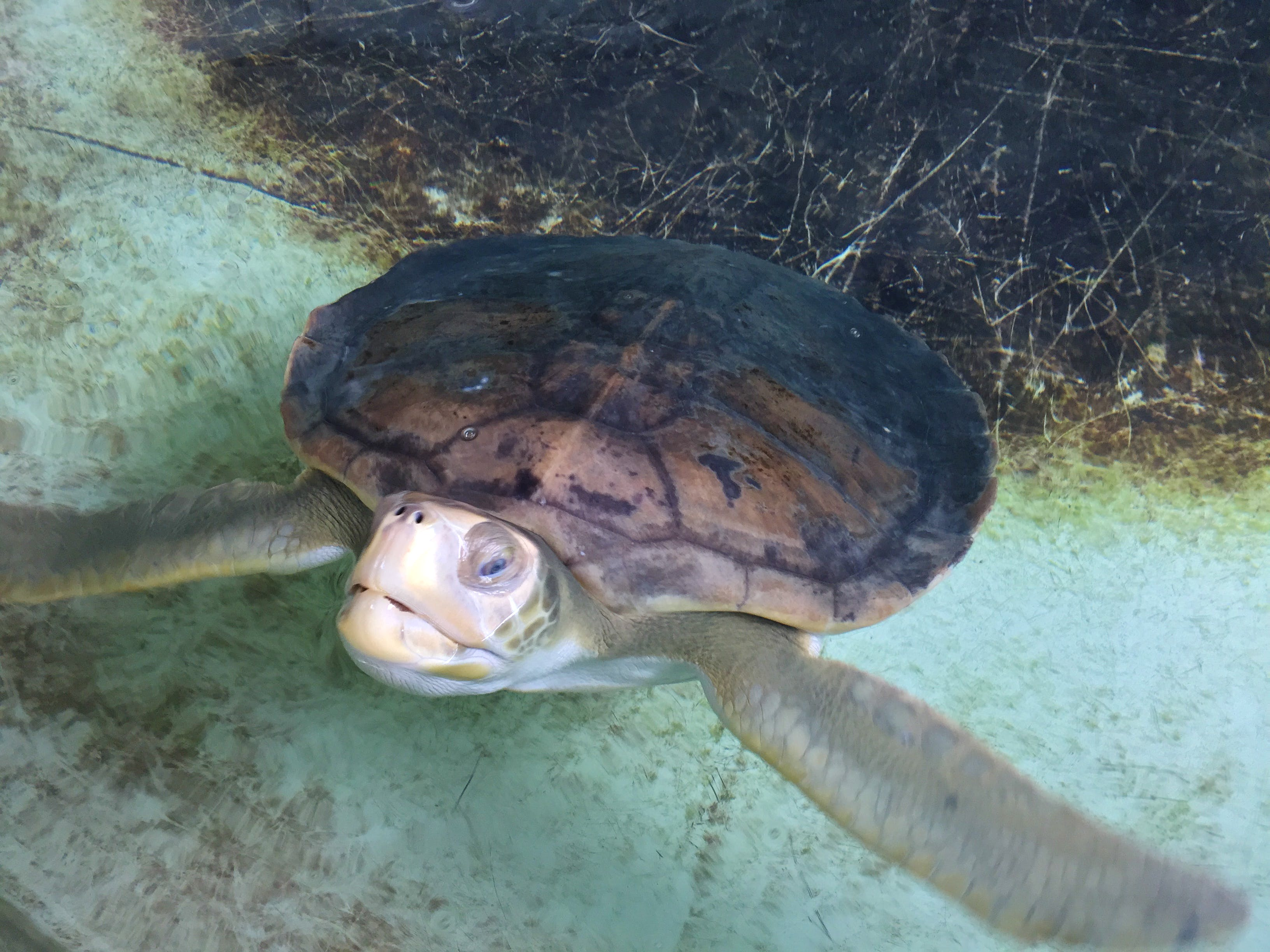 Great Barrier Turtle Conservation