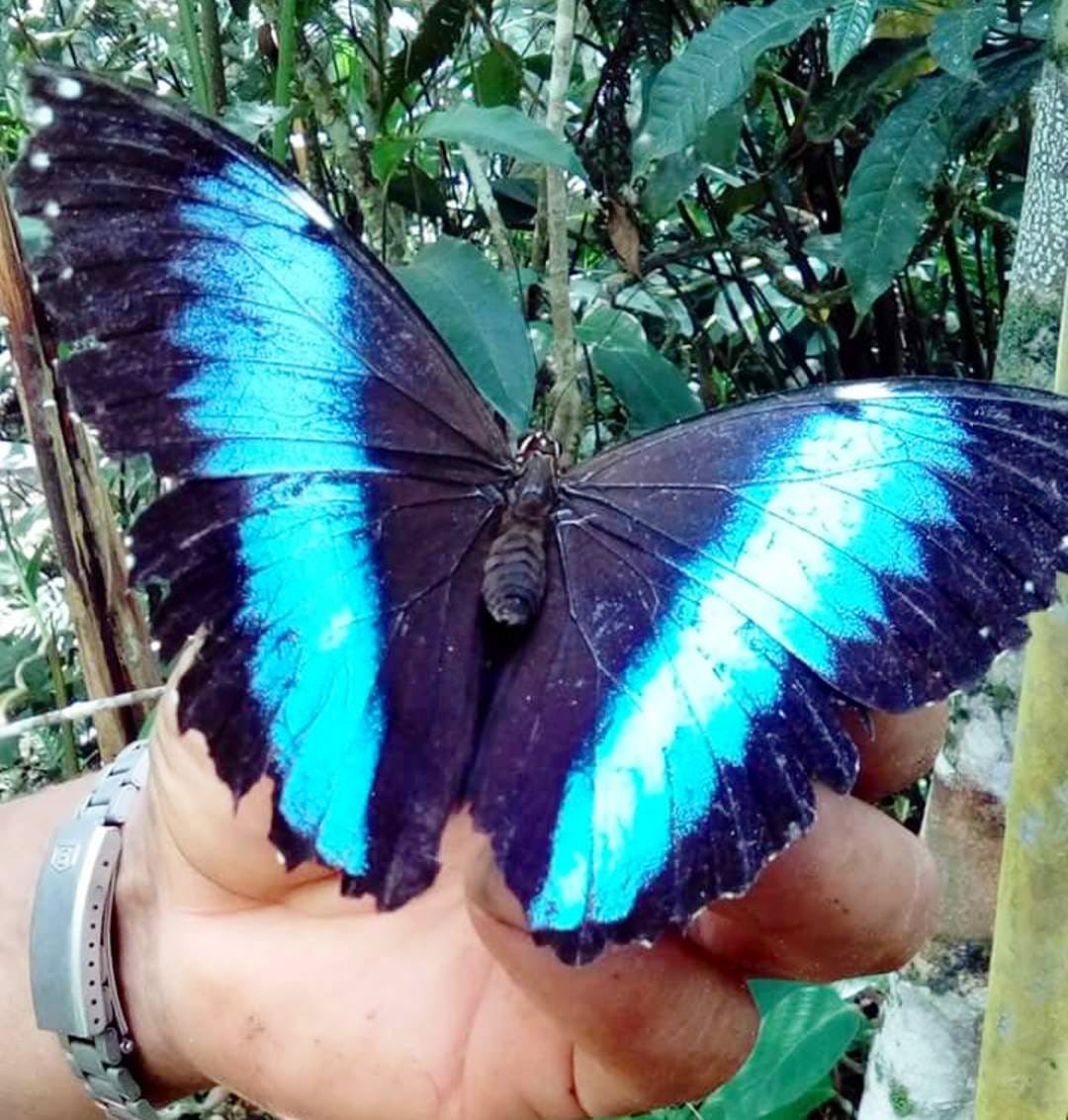 Butterfly House Caretaker