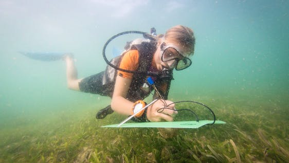 Marine Conservationist