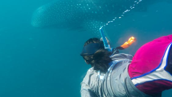 Whale Shark Researcher