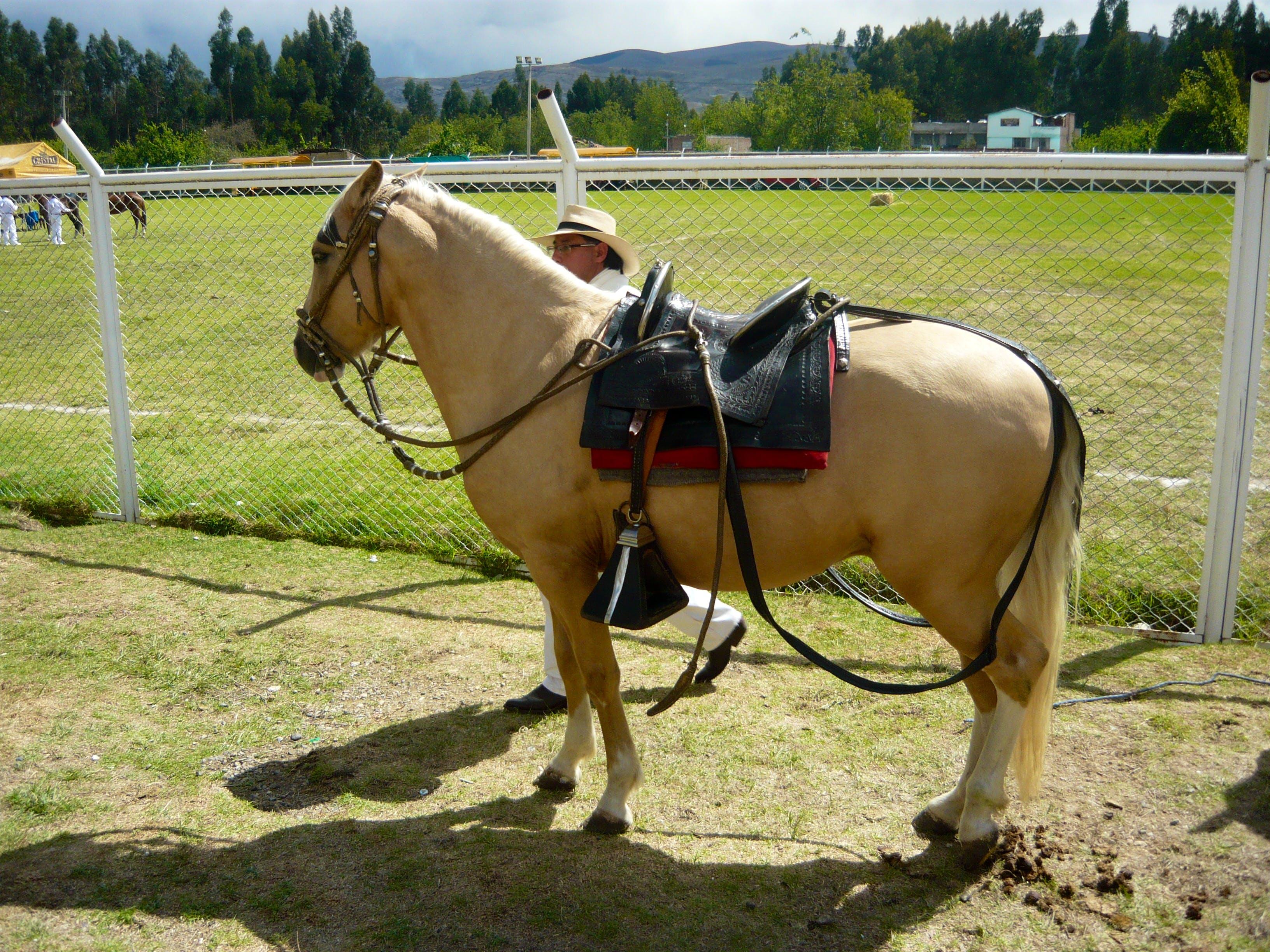 Horse-Training in Mantaro-Valley!