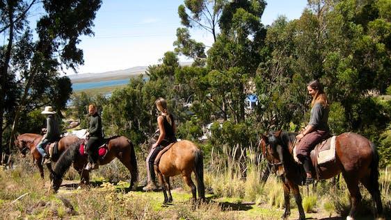 Horse Caretaker and Farm Maintenance