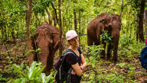 Elephant Research Internship