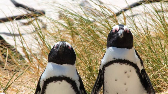 Penguin Sanctuary