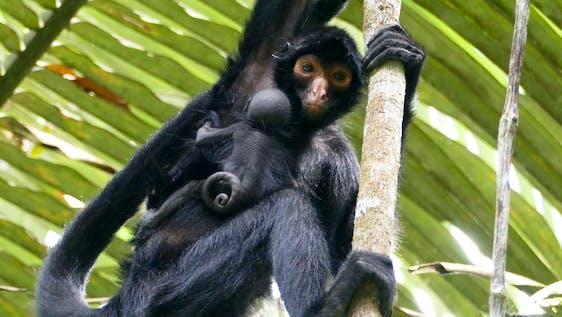 Animal Rehab in the Amazon Rainforest